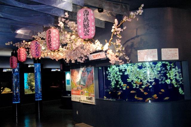 シーパレス花展示001