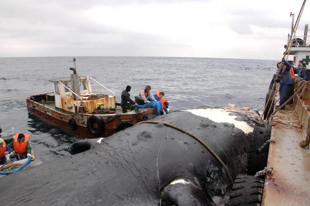 20110206セミクジラa-2