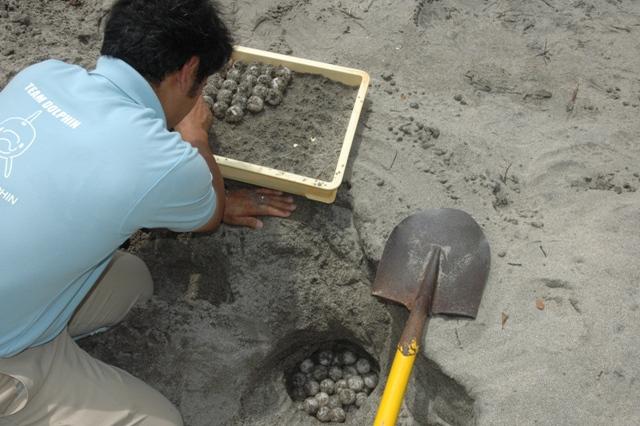 ウミガメ産卵2010a