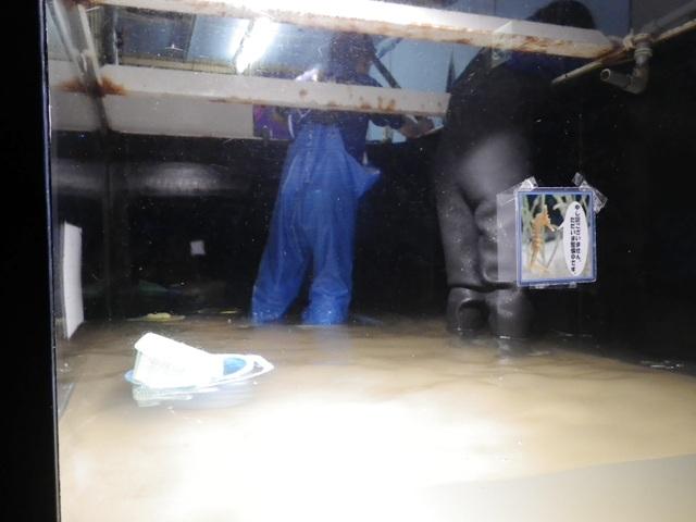 水槽掃除2