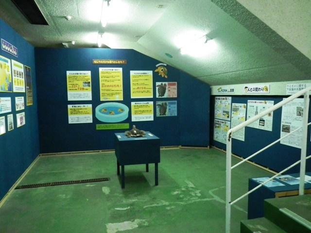 ウミガメ展2012-3