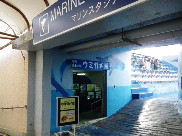 ウミガメ展2012-1